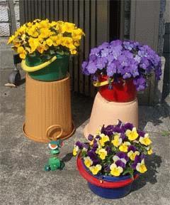 幻ちゃんの庭 - ビオラ