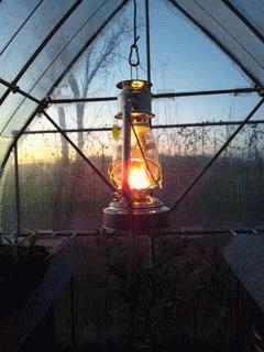 温室にランタンを吊るしました