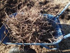 チガヤの地下茎を除去中です