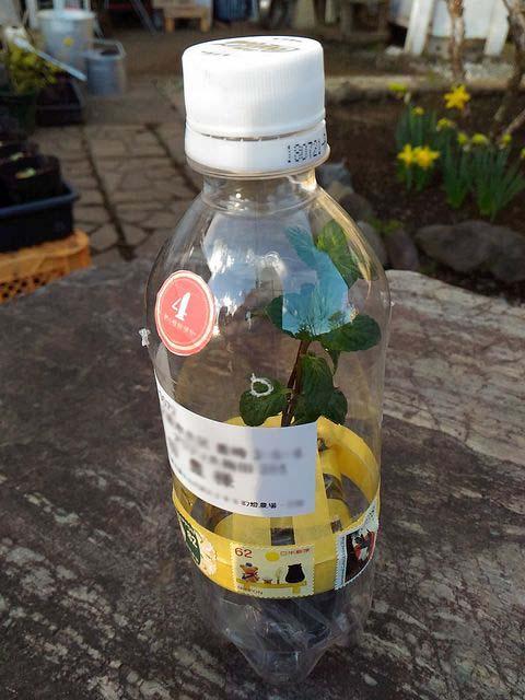 植物のペットボトル便