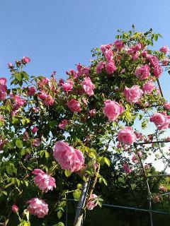 薔薇のエントランス